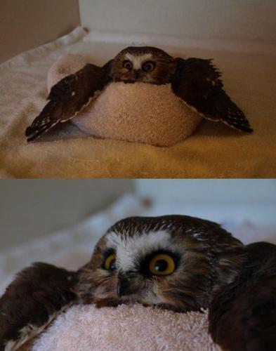 Owls, Different Owls, Meme Owls, Wet Owls, Funny Owls