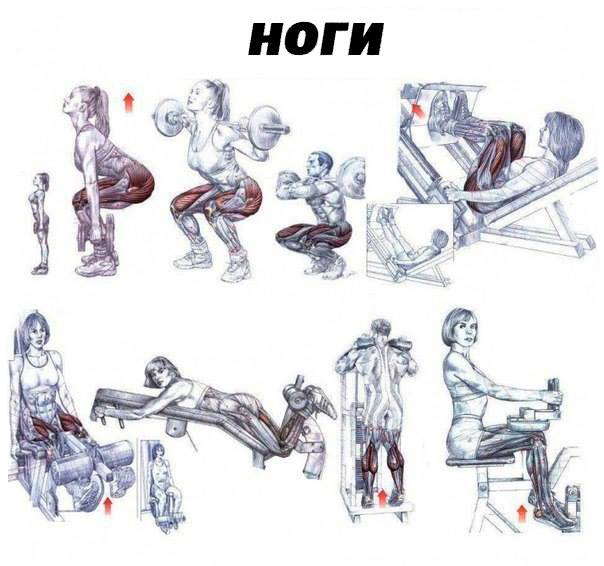 Exercises for each muscle group