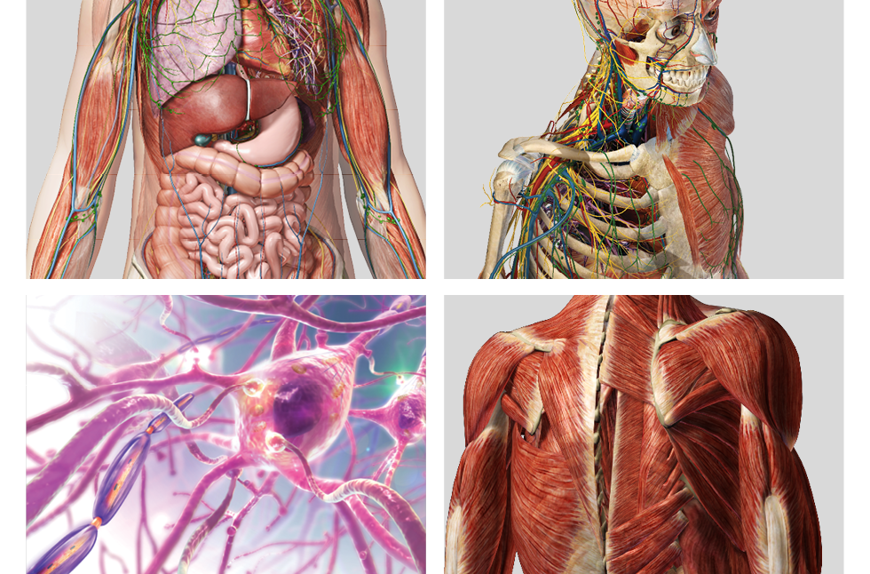 Facts About Internal Organs Shramev