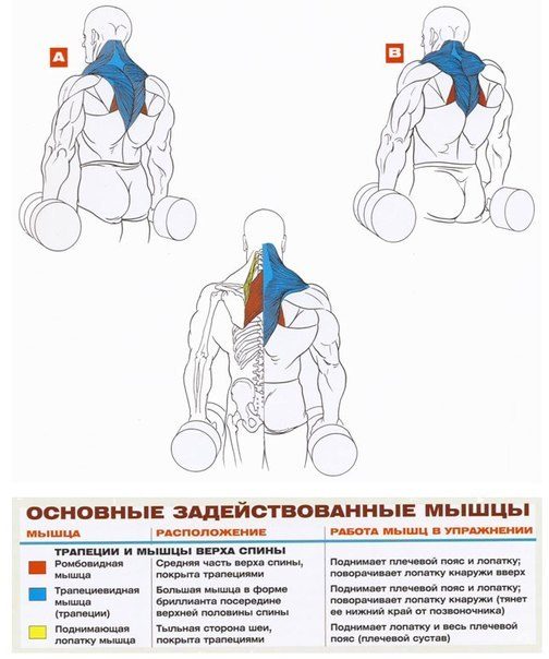 How muscles work in different exercises